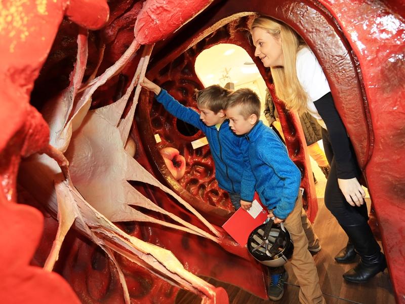 Der kardiologische Nachwuchs! Foto: Viktoria Kühne
